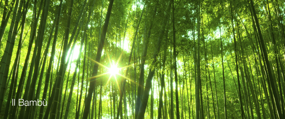 Floorbambooo il bamb sulle orme di marco polo for Bamboo coltivazione
